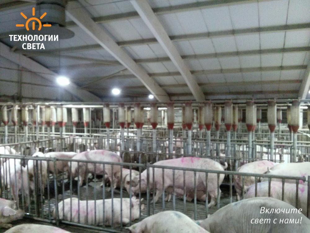 Животноводческое хозяйство